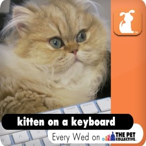 Kitten on a Keyboard
