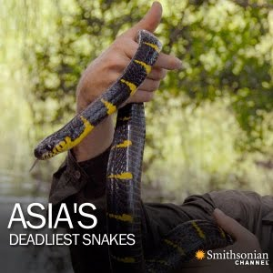 Asia's Deadliest Snakes