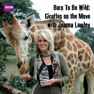 Born To Be Wild: Giraffes On The Move With Joanna Lumley