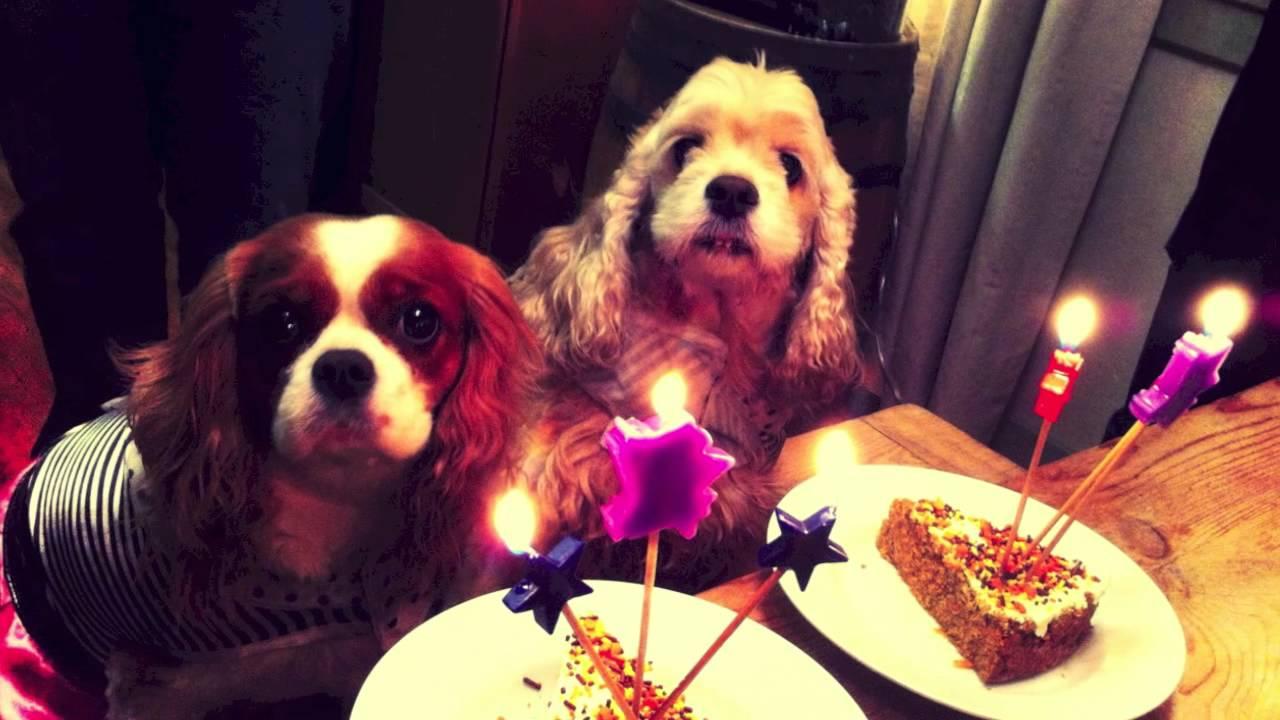 Dog Furry Friend Birthday Party Tag King Charles Cavalier Cocker ...