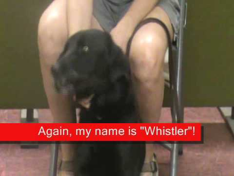Whistler: Adopted on 10/24 at The Franciscan Renewal Adoptathon!