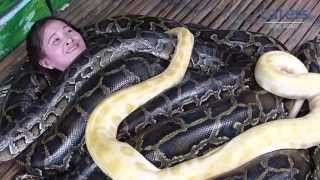 Crazy Snake Massage