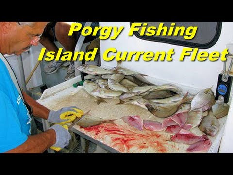 Porgy fishing with the island current fleet in new york for New york out of state fishing license