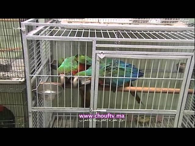 أشهر أنواع الطيور بسوق العيون (القريعة) | روبورتاج