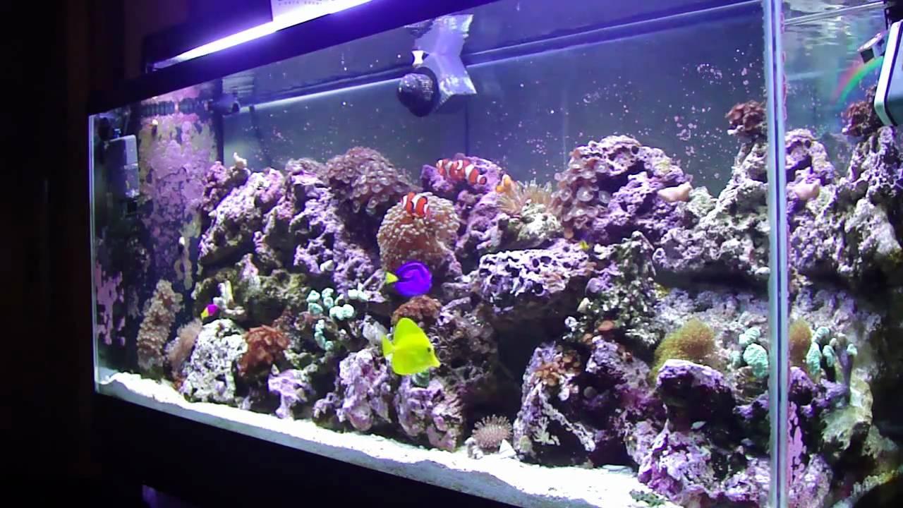 Saltwater aquarium 55 gallon setup 55 gallon reef for Fish for 55 gallon tank