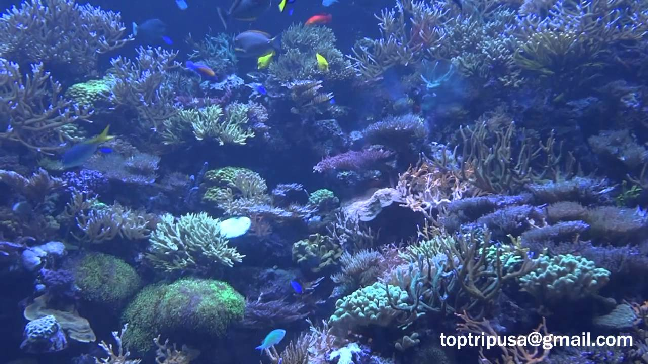 Seaworld Orlando Hd Aquarium Aquario Seaworld Dica