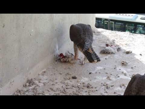 Al regresar a casa, 'Realejo' se encontraba muy hambriento