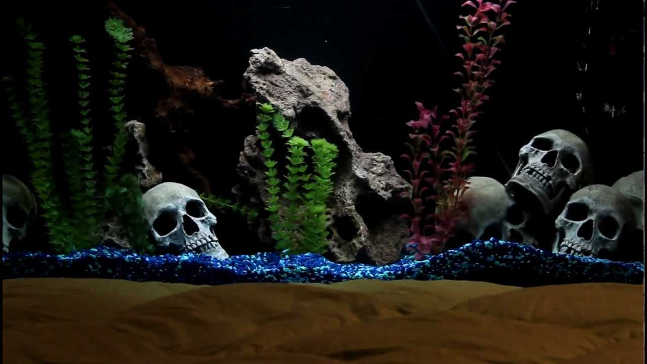 Fish tank headboard youtube for Youtube fish tank