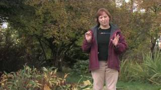 Gardening For Trees & Plants : Best Time For Pruning
