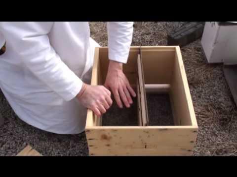 Beekeeping - Queen Rearing Part 1