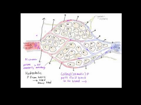 formation of lymphatic fluid