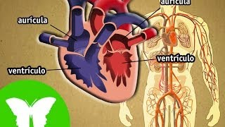 Conocimiento del medio: El aparato circulatorio
