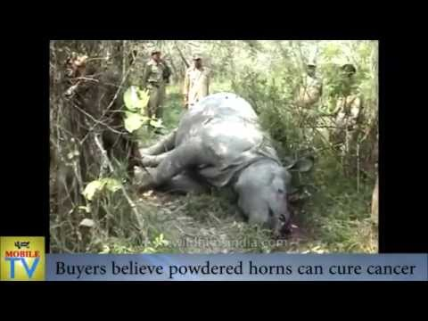 Illegal Rhino horn trade in Kaziranga National Park, Assam India