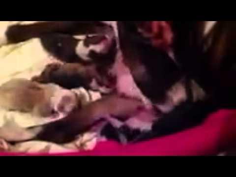 GRAPHIC live dog birth