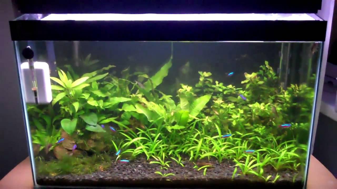 Beginner fish youtube for Best starter fish