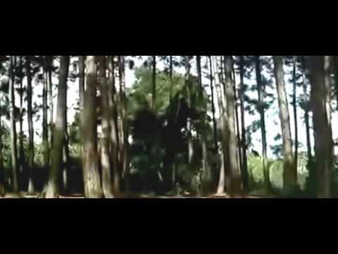 phim hành động kiếm hiệp hồng kong : thanh vân kiếm khách full hd thuyết minh