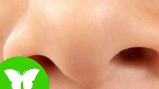 Conocimiento del medio: El sentido del olfato