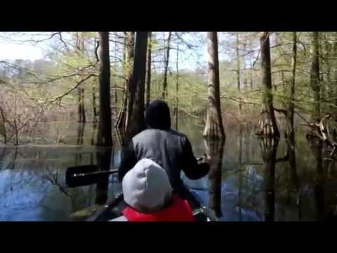 Meeman-Shelby Forest State Park through Google Glass