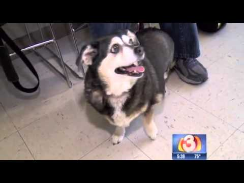 Overweight dog sheds pounds; finds home