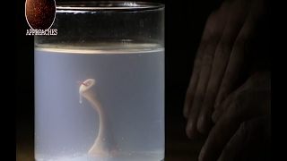 Man creates Monster in his basement with Sperm and Chicken Egg - Home Alchemy!