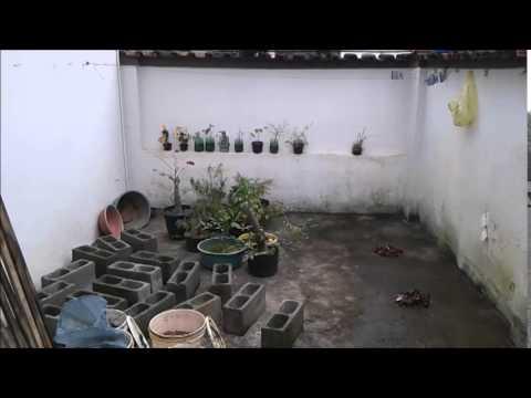 Bonsai 2014 - Limpeza de inverno