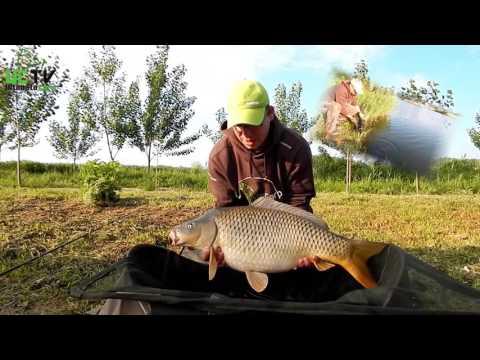 Amure vs. Kapre - Ultimate carp