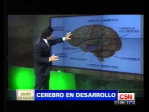C5N - LOS ENIGMAS DEL CEREBRO - CEREBRO Y DESARROLLO - 1