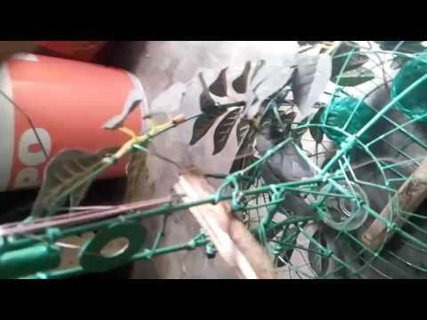 Lụp (gáo) cu gáy cầu tử 55cm