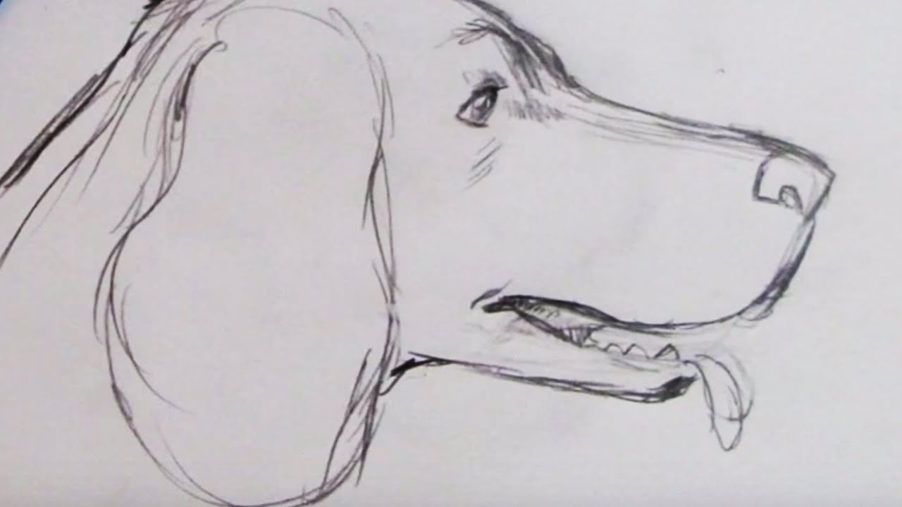 Line Drawing Of A Dog S Face : How to draw a dog spaniel youtube