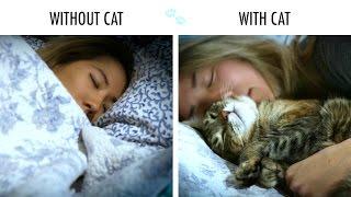 Con gato vs sin gato