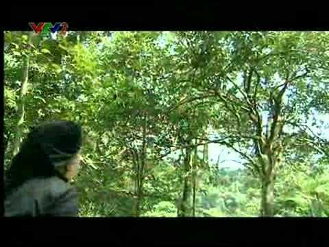 www.atkdinhhoa.com - Trở Lại ATK Định Hóa UPLOAD by h2_audio