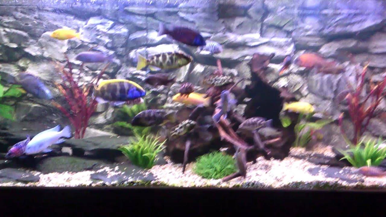 Aquarium backgrounds greek ruins marina aquarium for Marina aquarium