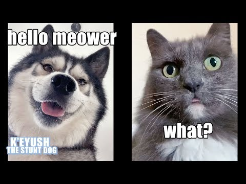 Dog FaceTimes Cat! Funny Conversation!