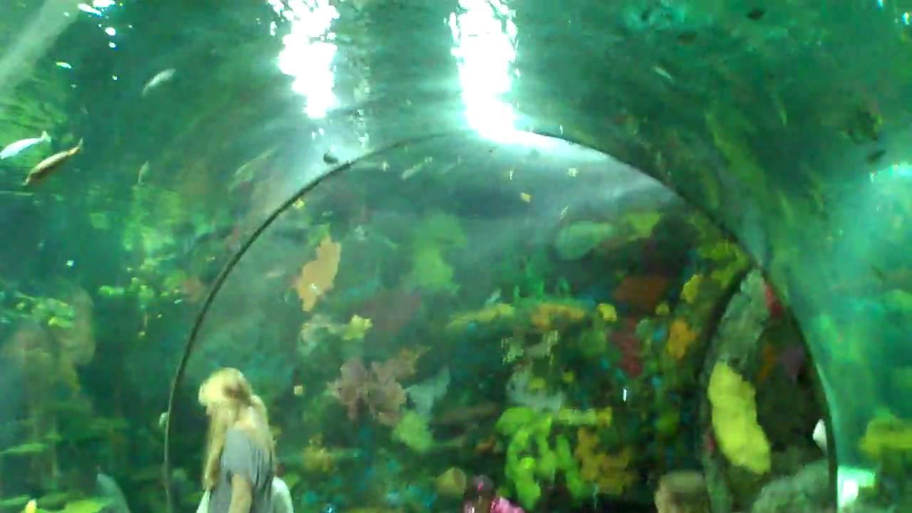 Under The Sea At Virginia Beach Aquarium Youtube