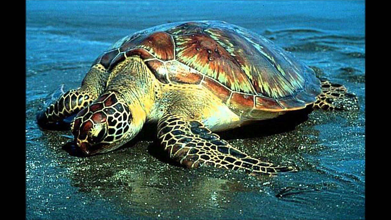 sea animals for kids - YouTube Pacific Ocean Underwater Animals