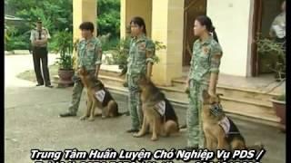 Địa chỉ huấn luyện chó dân sự tại Hà Nội
