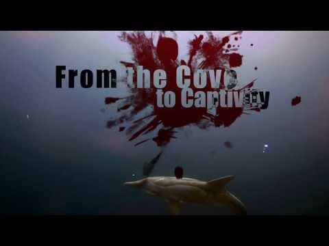 From the cove to captivity