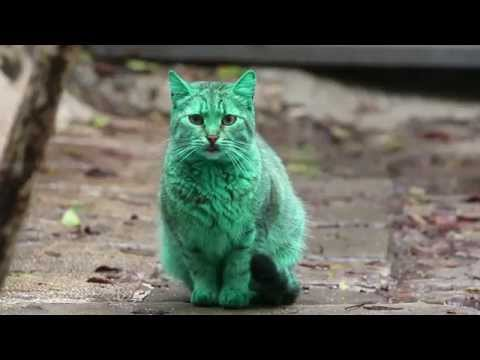 Mysterious Green Cat, Check out the Green Cat in Bulgaria.