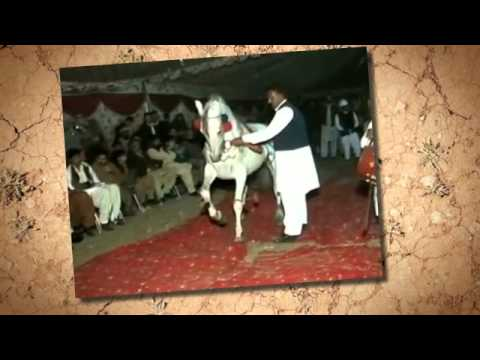 Horse dance in attock