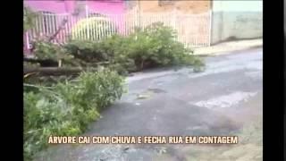 �rvore cai e fecha rua em Contagem