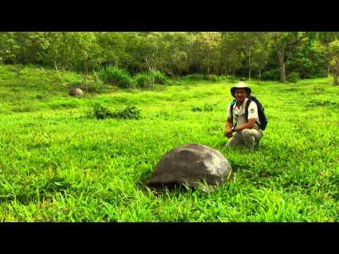 Galápagos Giant Tortoise in Timelapse