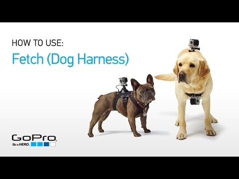 GoPro GP2038 fetch dog harness