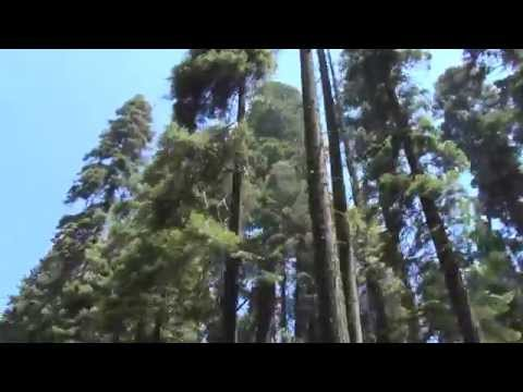 Road video, Sequoia National Park, USA