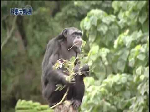 6. 人類與黑猩猩