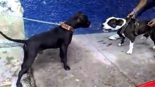 Peleas Callejeras De Perro