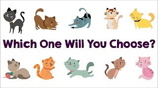 The Cat You Pick Will Reveal Your True Personality