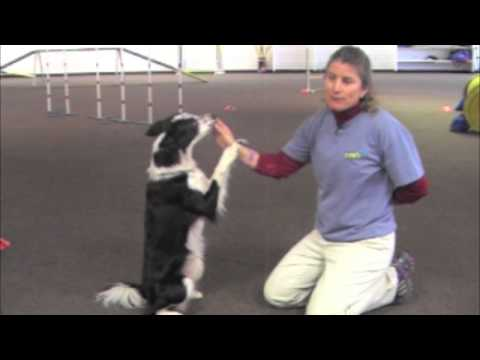 Villa La PAWs - Cool Dog Tricks - Sit Up