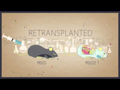 StemCellShorts - What is a stem cell? Narrated by Dr. Jim Till