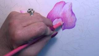 Colored Pencil Instruction With Paula Leopold
