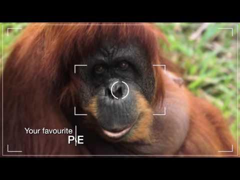 Your Favourite Memories (Eco) 30 sec